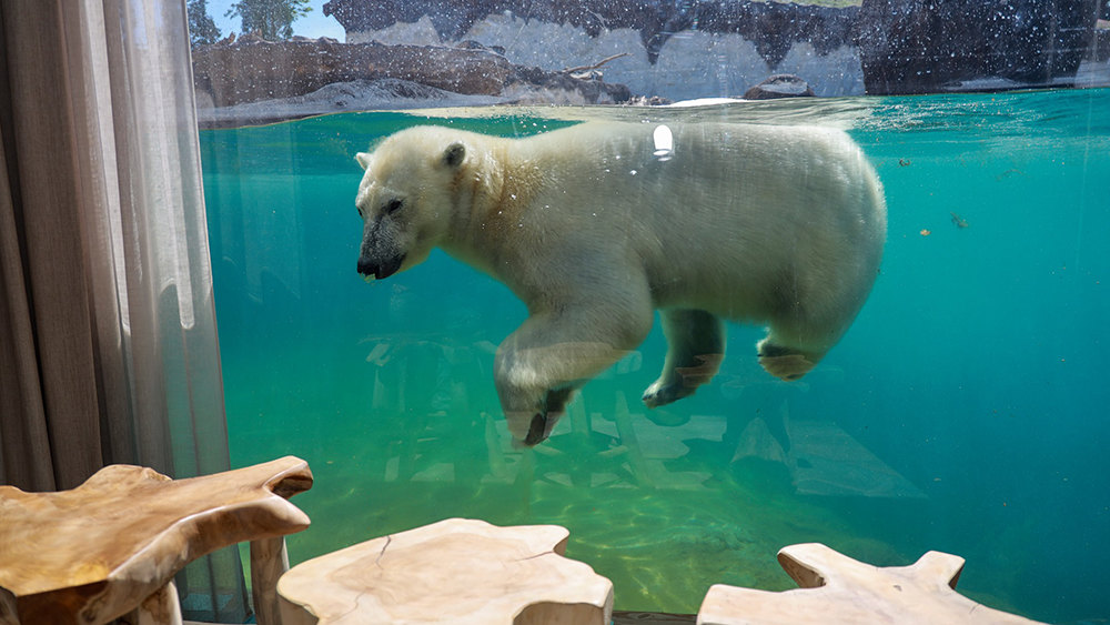 Polar Bear House