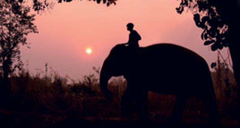 Слон разума